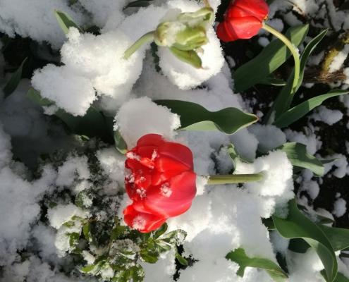 Frühlingsstimmung in der Villa Klothilde in Zell am See